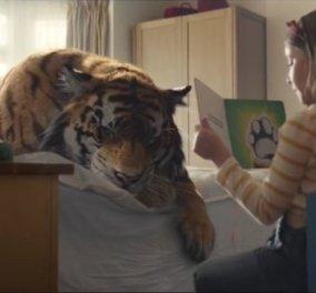H WWF δημιούργησε την πιο συγκινητική χριστουγεννιάτικη διαφήμιση: Οικογένεια βρίσκει πληγωμένη τίγρη και... - Κυρίως Φωτογραφία - Gallery - Video