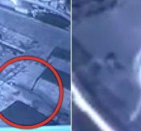 Το βίντεο της ημέρας: Κροκόδειλος επιτίθεται σε γυμνό ζευγάρι που κολυμπούσε σε πισίνα ξενοδοχείου - Κυρίως Φωτογραφία - Gallery - Video