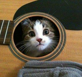 Απίθανο βίντεο: Η γάτα προσπαθεί πραγματικά να παίξει κιθάρα μαζί με το αφεντικό της - Κυρίως Φωτογραφία - Gallery - Video