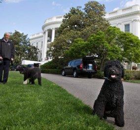 Πληγή και ράμματα άφησε στο πρόσωπο 18χρονης κοπέλας η σκυλίτσα των Ομπάμα  - Κυρίως Φωτογραφία - Gallery - Video