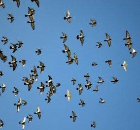 Ανοίξτε το παράθυρο και δείτε πουλιά: Λειτουργούν ως αντικαταθλιπτικό και αγχολυτικό - Κυρίως Φωτογραφία - Gallery - Video