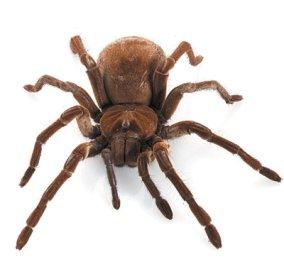 Δηλητηριώδης αράχνη προκαλεί το θάνατο σε 15' αλλά...: διορθώνει τη ζημιά μετά από εγκεφαλικό  - Κυρίως Φωτογραφία - Gallery - Video
