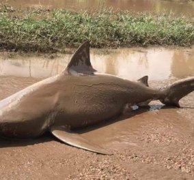 Τυφώνας Ντέμπι στην Αυστραλία έβγαλε καρχαρία στη στεριά! -Φώτο & Βίντεο - Κυρίως Φωτογραφία - Gallery - Video