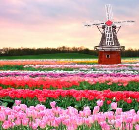 Ο μεγαλύτερος ανοιξιάτικος κήπος στον κόσμο βρίσκεται στην Ολλανδία - Δείτε τον μέσα από την ''ματιά'' ενός drone   - Κυρίως Φωτογραφία - Gallery - Video