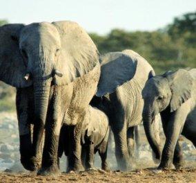 Επικό βίντεο! Ο κροκόδειλος αρπάζει ελεφαντάκι από την προβοσκίδα όμως η μαμά ελεφαντίνα το σώζει! - Κυρίως Φωτογραφία - Gallery - Video