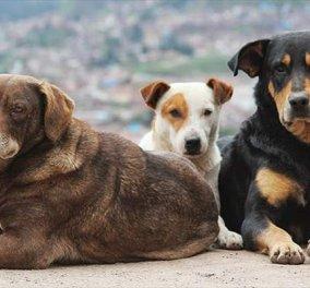 Απίστευτο περιστατικό στην Πάτρα: Ιερέας πυροβόλησε δύο σκυλιά μπροστά σε μικρά παιδιά - Κυρίως Φωτογραφία - Gallery - Video