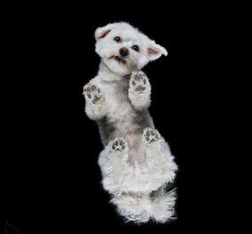 Τι άλλο θα δούμε: Σκυλιά από κάτω φωτογράφισε ο Andrius Burda και το αποτέλεσμα είναι μοναδικό (Φωτό) - Κυρίως Φωτογραφία - Gallery - Video