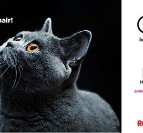 Ο παράδεισος των γατών στο All About Ctas 2017 -6 και 7 Μαΐου στο Helexpo Maroussi - Κυρίως Φωτογραφία - Gallery - Video