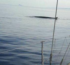 Α τι ωραία εικόνα από την Σύρο: Ήταν στο κατάστρωμα & μπροστά τους πετάχτηκε μία φάλαινα 12 μέτρων (Φωτό) - Κυρίως Φωτογραφία - Gallery - Video