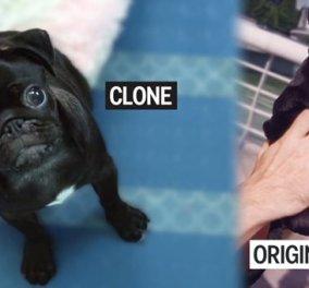 Eταιρεία στη Ν. Κορέα προσφέρει υπηρεσίες κλωνοποίησης σκύλων κατά παραγγελία - Κυρίως Φωτογραφία - Gallery - Video