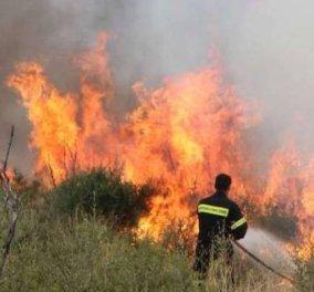 Μάχη με τις φλόγες δίνουν οι πυροσβέστες στη Μάνη - Πύρινα μέτωπα σε Σκουτάρι και Κοκκάλα - Κυρίως Φωτογραφία - Gallery - Video
