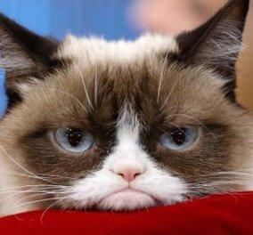 Βίντεο: Ατρόμητες γάτες - μαχήτριες κατατροπώνουν σκορπιούς, φίδια, αρκούδες & γίνεται της.... ζούγκλας - Κυρίως Φωτογραφία - Gallery - Video