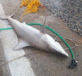 Αλλος για μεζέ καρχαρία; Στη Γαύδο τον ψάρεψαν και δεν πίστευαν στα μάτια τους (ΦΩΤΟ) - Κυρίως Φωτογραφία - Gallery - Video