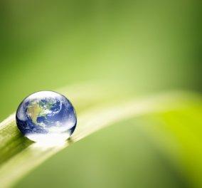 Δείτε ποιες 6 «οικολογικές» συνήθειες βλάπτουν το περιβάλλον  - Κυρίως Φωτογραφία - Gallery - Video