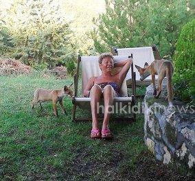 Απίστευτες εικόνες: Τρία μικρά αλεπουδάκια σαν κατοικίδια σε σπίτι στη Χαλκιδική  - Κυρίως Φωτογραφία - Gallery - Video