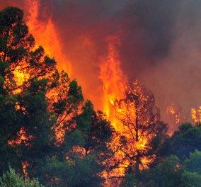 Σε κατάσταση έκτακτης ανάγκης η Ζάκυνθος - Σε εξέλιξη βρίσκονται 12 μέτωπα - Κυρίως Φωτογραφία - Gallery - Video
