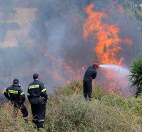 Πυρκαγιά στο Κρυονέρι Αμαλιάδας – Εκκενώνεται το χωριό Ανάληψη  - Κυρίως Φωτογραφία - Gallery - Video
