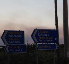Πυροσβεστική: 91 πυρκαγιές σε όλη την Ελλάδα το περασμένο 24ωρο - 22 μόνο στην Ζάκυνθο    - Κυρίως Φωτογραφία - Gallery - Video