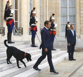 Τον Nέμο ένα 2χρονο λαμπραντόρ υιοθέτησαν οι Μακρόν - Πως έλεγαν τα σκυλάκια του Μιτεράν & του Ολάντ (ΦΩΤΟ) - Κυρίως Φωτογραφία - Gallery - Video