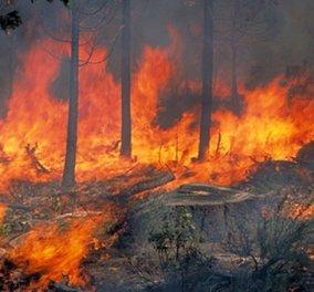 Πολύ υψηλός και πάλι ο κίνδυνος πυρκαγιάς - ο χάρτης της Γενικής Γραμματείας Πολιτικής Προστασίας - Κυρίως Φωτογραφία - Gallery - Video