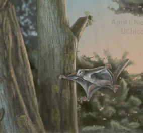 Ανακαλύφθηκαν τα αρχαιότερα θηλαστικά-αιωροπτεριστές ηλικίας 160 εκατ. ετών - Κυρίως Φωτογραφία - Gallery - Video
