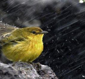 Έκτακτο δελτίο επιδείνωσης καιρού: Έρχονται βροχές και καταιγίδες για τρεις μέρες - Κυρίως Φωτογραφία - Gallery - Video