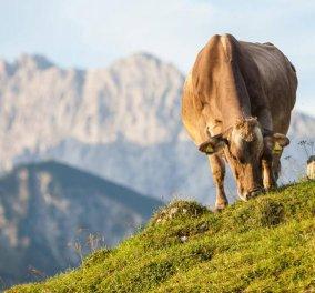 Εκπληκτικές έρευνες αποδεικνύουν γιατί το βιολογικό γάλα & το βιολογικό κρέας είναι ανώτερης ποιότητας  - Κυρίως Φωτογραφία - Gallery - Video