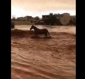 Βίντεο: Η δραματική προσπάθεια ενός αλόγου να ξεφύγει από τα ορμητικά νερά στην Μάνδρα! - Κυρίως Φωτογραφία - Gallery - Video