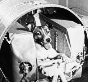 60 χρόνια... όταν η Λάικα πήγε στο διάστημα - Ο πρώτος ζωντανός «κοσμοναύτης» του πλανήτη (ΒΙΝΤΕΟ) - Κυρίως Φωτογραφία - Gallery - Video
