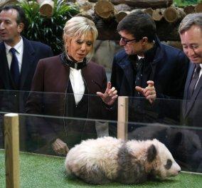 """Η Μπριζίτ Μακρόν έγινε """"νονά""""! - Βάφτισε το πρώτο panda που γεννήθηκε στη Γαλλία ( ΦΩΤΟ -ΒΙΝΤΕΟ) - Κυρίως Φωτογραφία - Gallery - Video"""