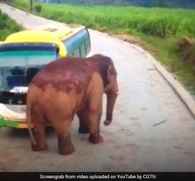 Τσαντίστηκε ο ελέφαντας και έσπασε το παρμπρίζ  λεωφορείου και φορτηγού στην Κίνα (ΒΙΝΤΕΟ) - Κυρίως Φωτογραφία - Gallery - Video