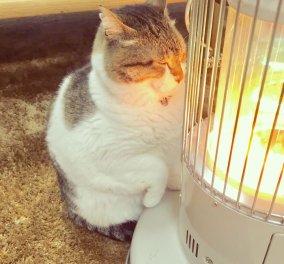 """""""Κάνει κρύο καιρός για δύο""""- Αξιολάτρευτη γατούλα ερωτεύεται μια σόμπα! (ΦΩΤΟ) - Κυρίως Φωτογραφία - Gallery - Video"""