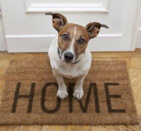 Smile βίντεο: Σκυλάκος τρομάζει από βεγγαλικά & μπαίνει μέσα στο ψυγείο - Γελάστε ελεύθερα... (ΒΙΝΤΕΟ) - Κυρίως Φωτογραφία - Gallery - Video