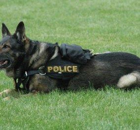Απρόσμενη εξέλιξη σε επέμβαση των Αρχών - Καταζητούμενος από το Νιού Χάμσαϊρ... δάγκωσε σκύλο της αστυνομίας! - Κυρίως Φωτογραφία - Gallery - Video