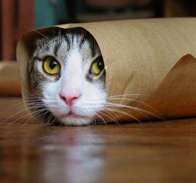 Απίθανα βίντεο: Παιχνίδι και χαρά είναι για τις γάτες αυτές οι χαρτοσακούλες- Ξεκαρδιστικά στιγμιότυπα!  - Κυρίως Φωτογραφία - Gallery - Video