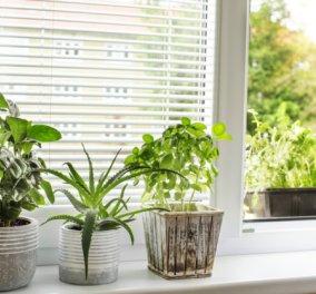 Κάντε το σπίτι σας να μυρίσει όμορφα μέσα σε λίγα μόνο λεπτά με συμβουλές του Σπύρου Σούλη  - Κυρίως Φωτογραφία - Gallery - Video