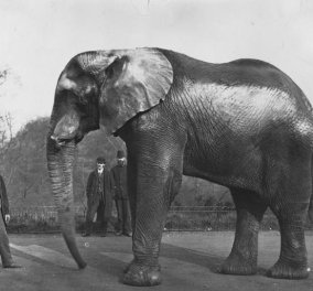 Vintage story: Jumbo το ελεφαντάκι - Η αληθινή ιστορία του θρυλικού ελέφαντα - σταρ με το τραγικό τέλος  - Κυρίως Φωτογραφία - Gallery - Video