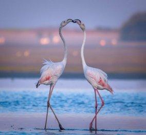 """""""Ερωτευμένα"""" ζωάκια ανταλλάσσουν φιλιά! Γιατί η ημέρα των ερωτευμένων δεν είναι μόνο για τους ανθρώπους.. (ΦΩΤΟ) - Κυρίως Φωτογραφία - Gallery - Video"""