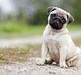 Νέα έρευνα υποστηρίζει ότι ο σκύλος μπορεί να σας δαγκώσει εάν είστε αγχώδης   - Κυρίως Φωτογραφία - Gallery - Video