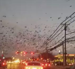Στο Τέξας ο ουρανός γέμισε πουλιά - Οι άνθρωποι έμειναν με το στόμα ανοιχτό! (ΒΙΝΤΕΟ) - Κυρίως Φωτογραφία - Gallery - Video