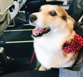 Απίστευτη viral pic με σκυλίτσα να παρηγορεί άντρα που έχασε το κατοικίδιό του (ΦΩΤΟ - ΒΙΝΤΕΟ) - Κυρίως Φωτογραφία - Gallery - Video