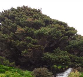 Αυτό είναι πιο... μοναχικό δέντρο στον πλανήτη - Στέκεται μόνο το καημένο με το κοντινότερο να είναι 170 μίλια μακριά (ΒΙΝΤΕΟ) - Κυρίως Φωτογραφία - Gallery - Video