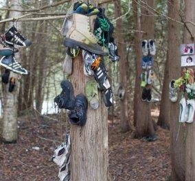 Θρίλερ ή παραξενιά; Ένα δάσος γεμάτο παπούτσια κρεμασμένα στα δέντρα   - Κυρίως Φωτογραφία - Gallery - Video