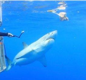 Απίστευτο! Καρχαρίας κόλλησε στο κλουβί και ο δύτης τον βοήθησε να φύγει (ΦΩΤΟ - ΒΙΝΤΕΟ)  - Κυρίως Φωτογραφία - Gallery - Video