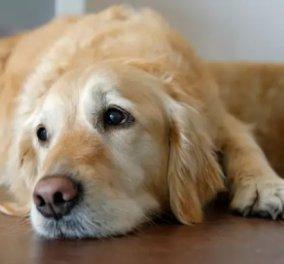 Αλλαγές στο νόμο για τα κατοικίδια: Υψηλά πρόστιμα σε ιδιοκτήτες που δεν στειρώνουν τα ζώα - Κυρίως Φωτογραφία - Gallery - Video