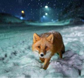 Sony World Photography Awards 2018: Υπέροχα κλικς που αιχμαλωτίζουν τη στιγμή και μας εντυπωσιάζουν (ΦΩΤΟ) - Κυρίως Φωτογραφία - Gallery - Video