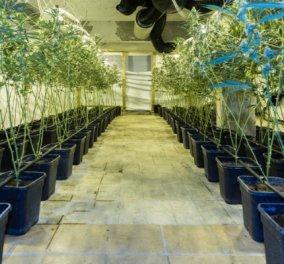 Σε βίλες της Εκάλης και του Διονύσου καλλιεργούν (sic) την πανάκριβη υδροπονική κάνναβη - Κυρίως Φωτογραφία - Gallery - Video