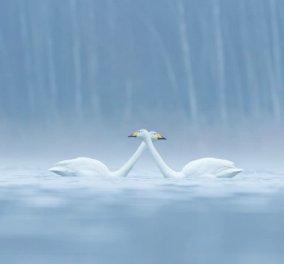 Εντυπωσιακά & βραβευμένα κλικς με πτηνά - Πανέμορφα πουλιά φερμένα σαν από όνειρο, απολαύστε τα! (ΦΩΤΟ) - Κυρίως Φωτογραφία - Gallery - Video