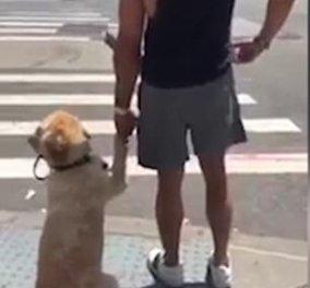 Το βίντεο της ημέρας: Απίθανος σκύλος κρατάει τον ιδιοκτήτη του από το χέρι για να περάσουν τον δρόμο!   - Κυρίως Φωτογραφία - Gallery - Video