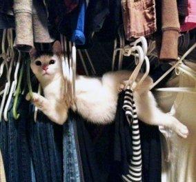 Αυτές οι γάτες δεν φημίζονται για την ευφυΐα τους αλλά θα τις λατρέψετε! (ΦΩΤΟ) - Κυρίως Φωτογραφία - Gallery - Video